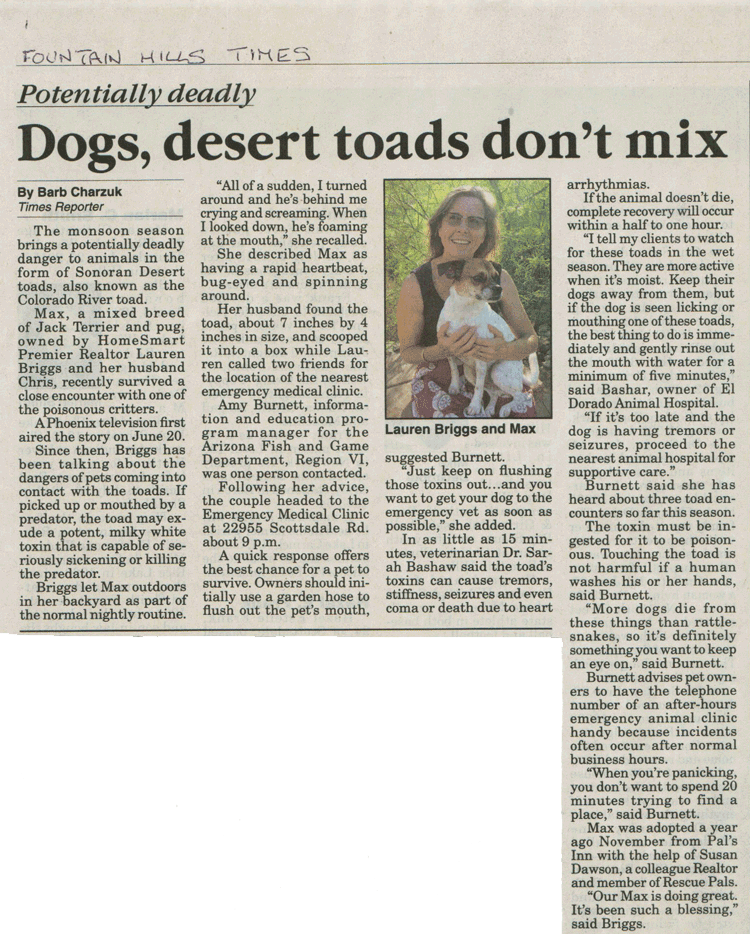 Dogs Desert Toads dont mix