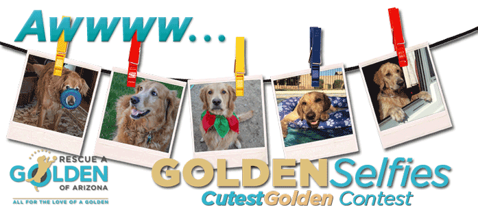 Cutest Golden 2017 Masthead Banner 697