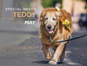 05May Teddy 280