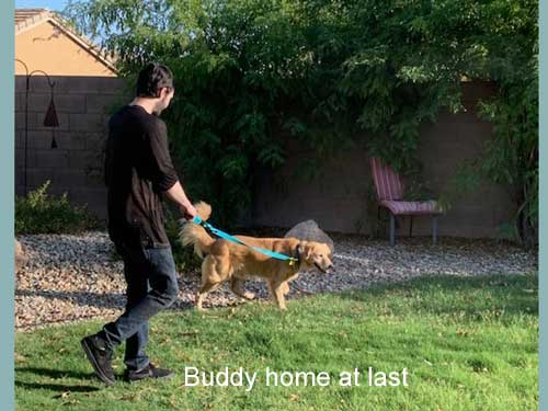 Buddy-19-036-Home-at-last.jpg