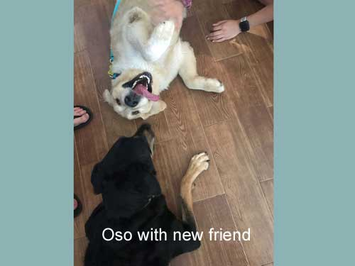 Oso-19-040-with-new-friend.jpg