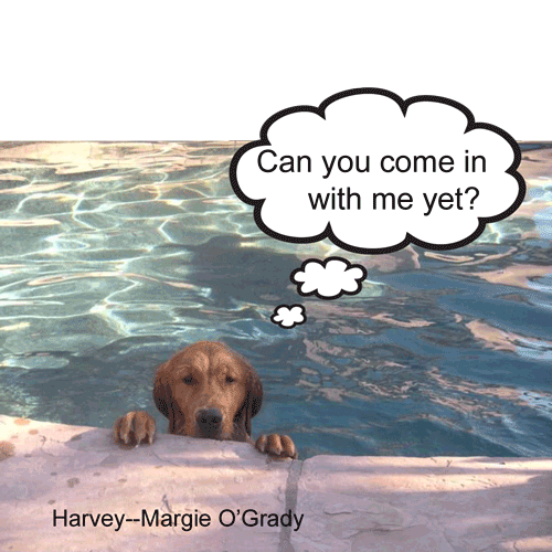 12-Harvey-Margie-OGrady.png